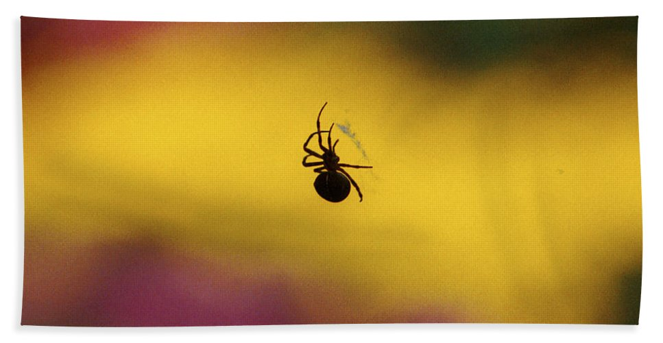 Spider Beach Towel featuring the photograph Spider by Wes and Dotty Weber
