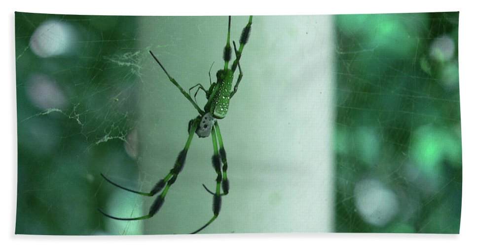 Ericamaxine Beach Towel featuring the photograph Spiders - Mr And Mrs by Ericamaxine Price