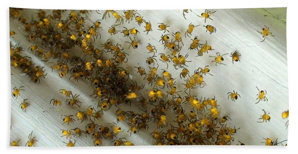 Beach Towel featuring the photograph Spiders Spiders Spiders by Mark Valentine
