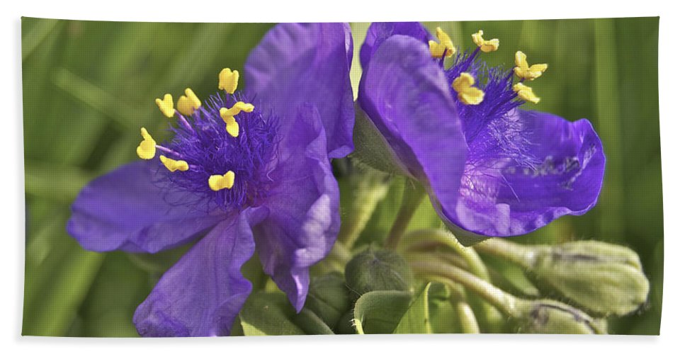 3-petaled Beach Towel featuring the photograph Spiderwort 2273 by Michael Peychich