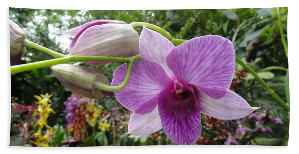 Orchids Beach Towel featuring the photograph Spokeswoman by Trish Hale