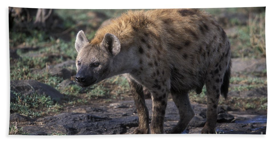 Africa Beach Towel featuring the photograph Spotted Hyena by Sandra Bronstein