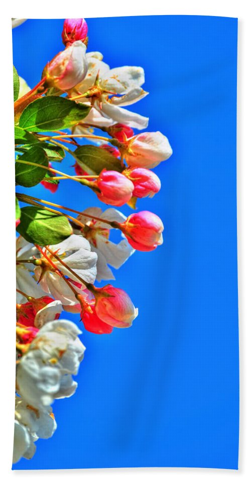 Beach Towel featuring the photograph Spring Blossoms by Michael Frank Jr