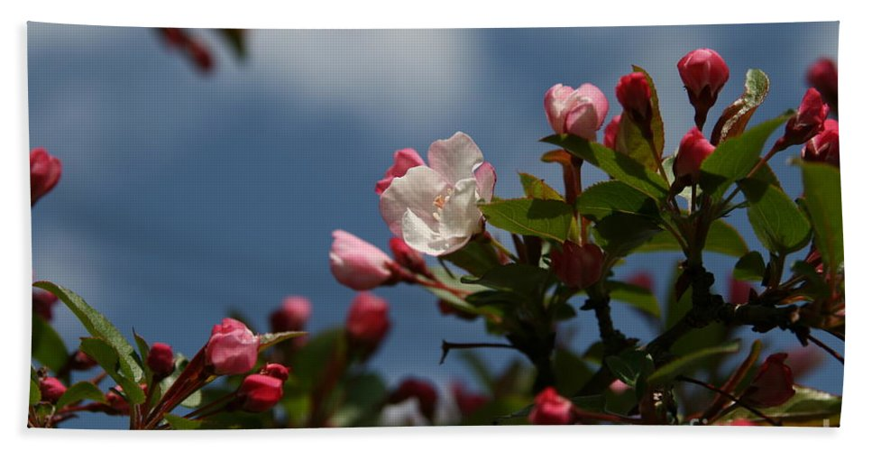Flower Photography Beach Towel featuring the photograph Spring Blossoms by Neal Eslinger