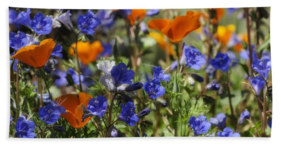 California Golden Poppies Beach Towel featuring the photograph Spring Flowers by Saija Lehtonen