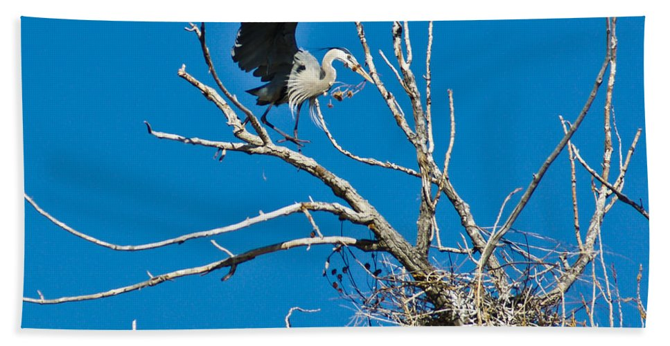 Bird Beach Towel featuring the photograph Springtime Nesting In Colorado by Colleen Coccia