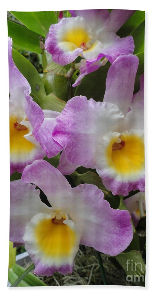 Orchids Beach Towel featuring the photograph Springy Ruffles by Trish Hale