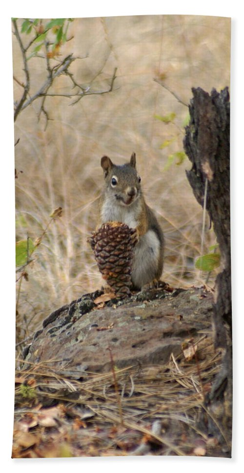 Squirrel Beach Towel featuring the photograph Squirrel And Cone by Ben Upham III