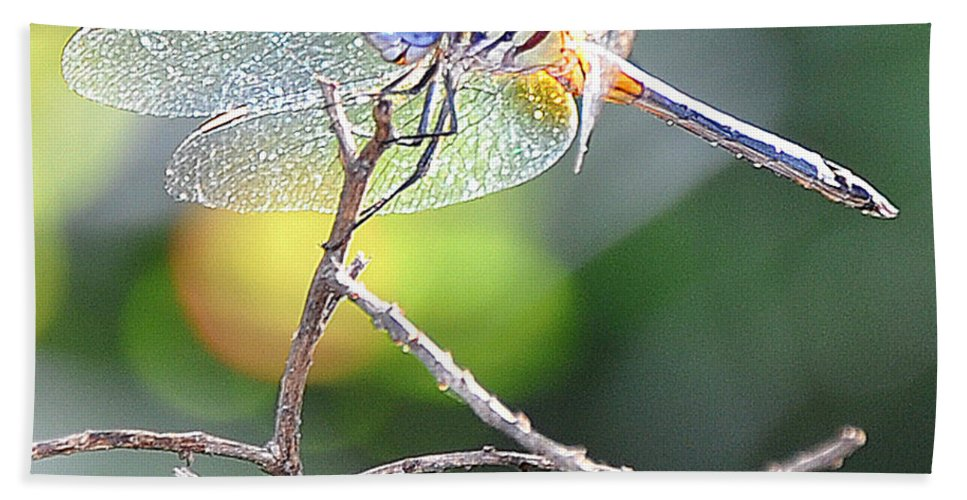 Dragonfly Beach Towel featuring the photograph Stained Glass Inspiration Feminine by Christine Stonebridge