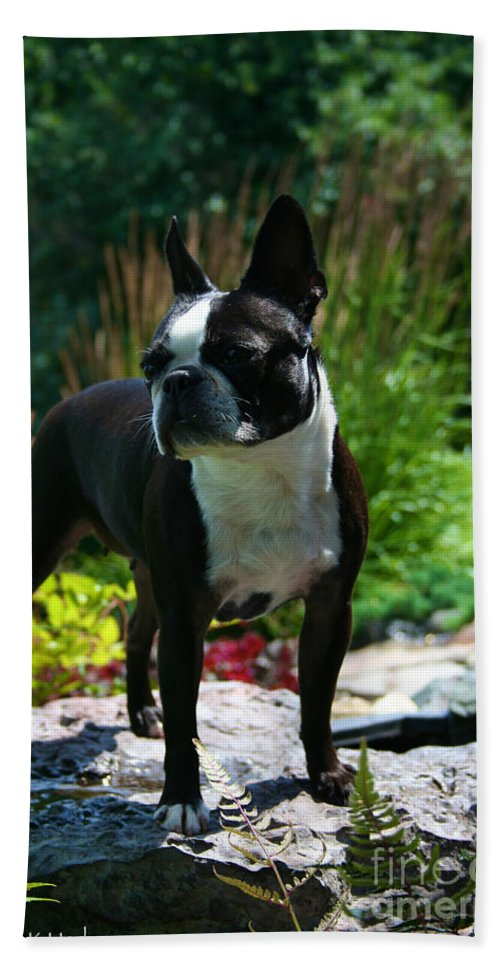 Boston Terrier Beach Towel featuring the photograph Stephanie by Susan Herber
