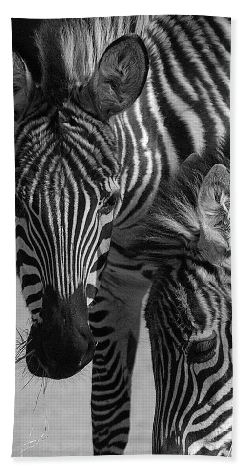 Stripes Beach Towel featuring the photograph Stripes - Zebra by D'Arcy Evans