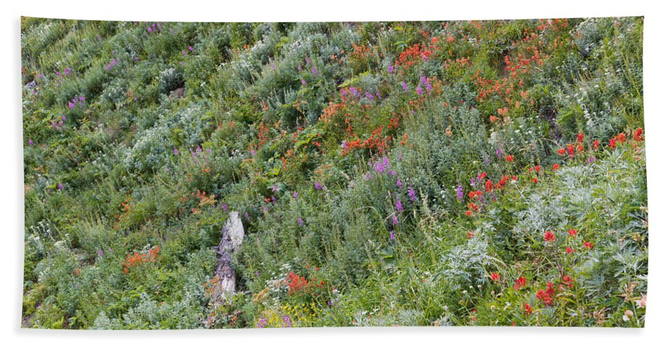 Wildflowers Beach Towel featuring the photograph Subalpine Wildflowers by Heidi Smith