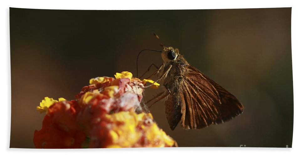 Butterfly Beach Towel featuring the photograph Suck It Up by Kim Henderson