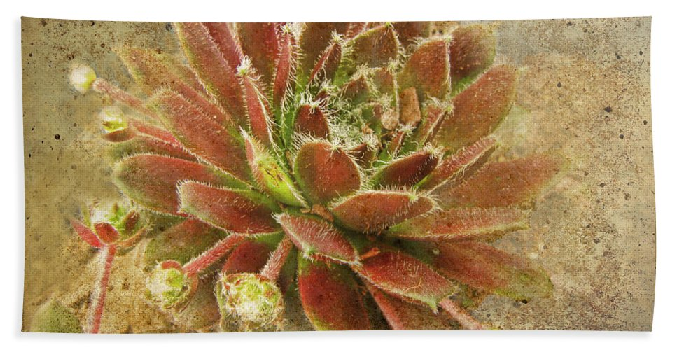 Botanical Beach Towel featuring the photograph Suculant Blank Greeting Card by Debbie Portwood