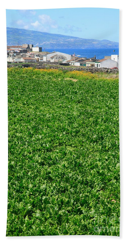 Green Beach Towel featuring the photograph Sugarbeet Field by Gaspar Avila