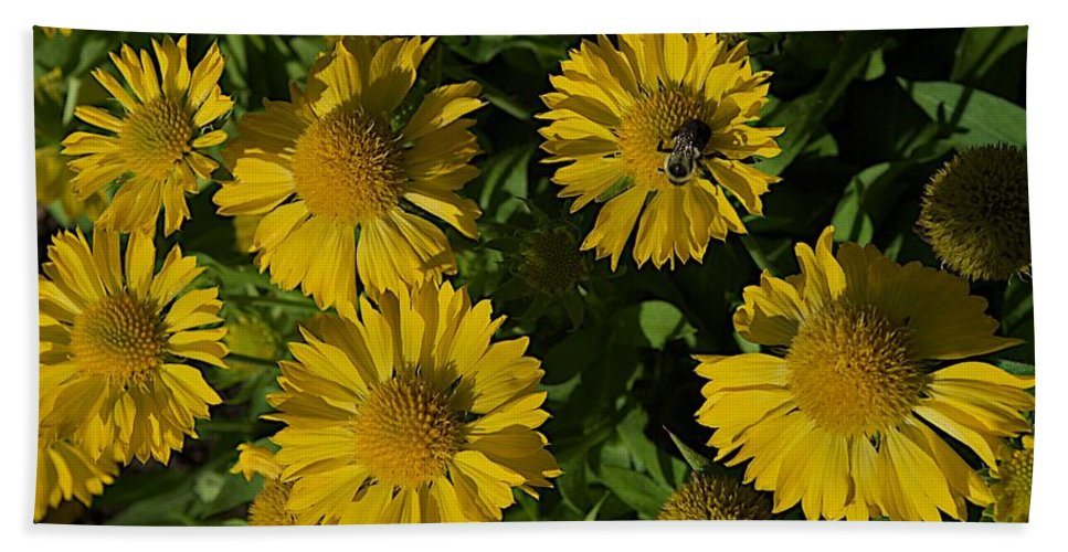 Bumble Bee Beach Towel featuring the photograph Summer by Joseph Yarbrough