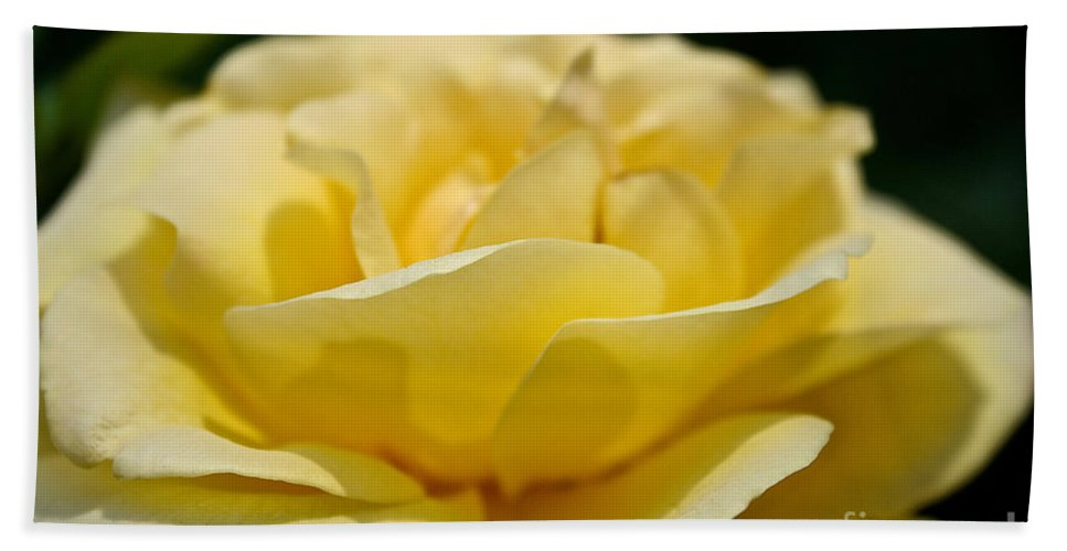 Plant Beach Towel featuring the photograph Summer Loves A Rose by Susan Herber
