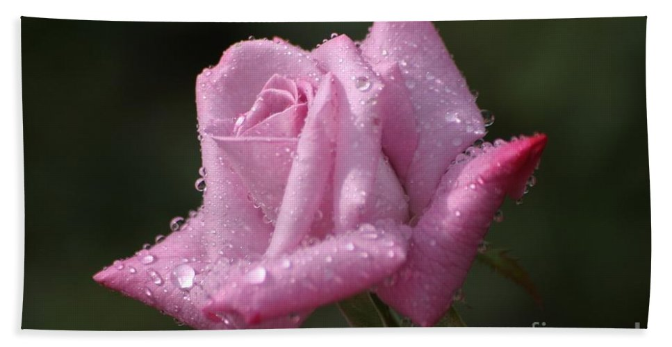 Rose Beach Towel featuring the photograph Summer Shower by Living Color Photography Lorraine Lynch