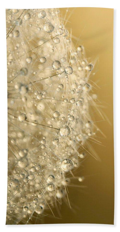 Dandelion Beach Towel featuring the photograph Sun Sparkled Dandy by Sharon Johnstone