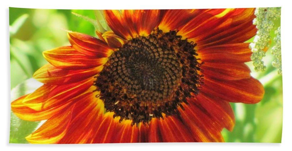 Sunflowers Beach Towel featuring the photograph Sunflower by Michelle Cassella