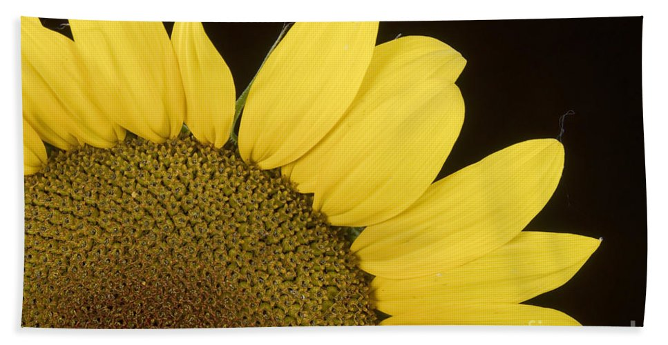 Sunflowers Beach Towel featuring the photograph Sunflower Sunshine by James BO Insogna