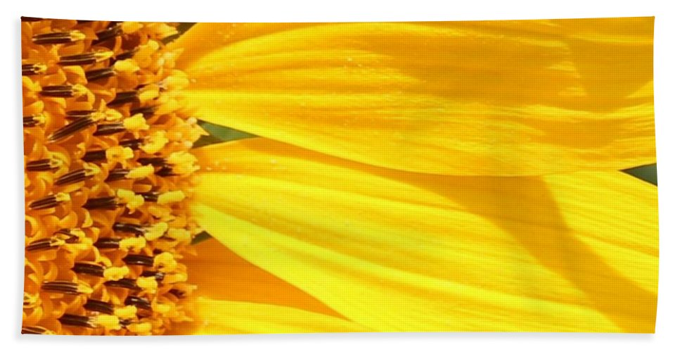 Sunflower Beach Towel featuring the photograph Sunflower Yellow by Betty Northcutt
