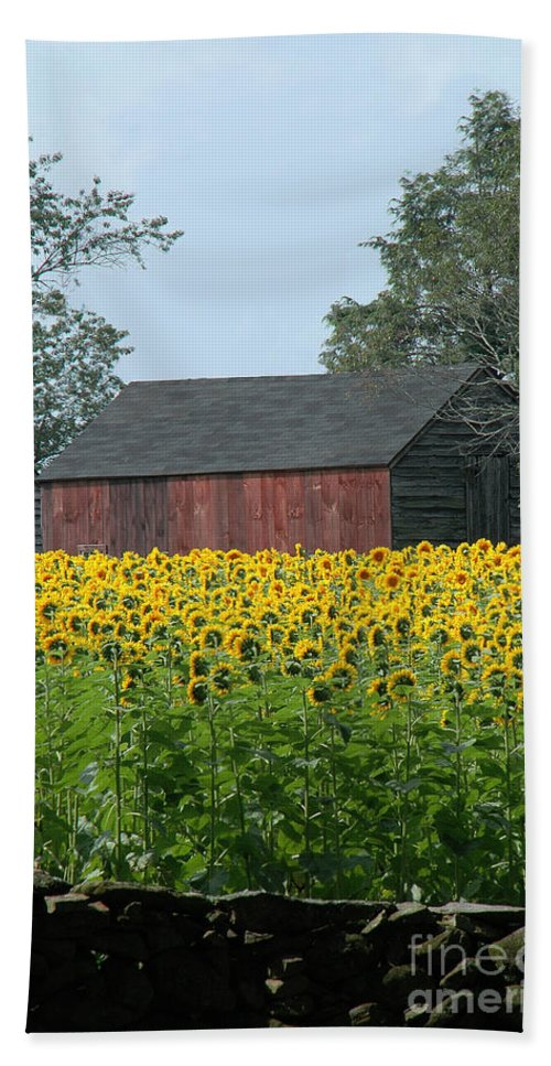 Sunflowers Beach Towel featuring the photograph Sunflowers 8 by Mike Nellums