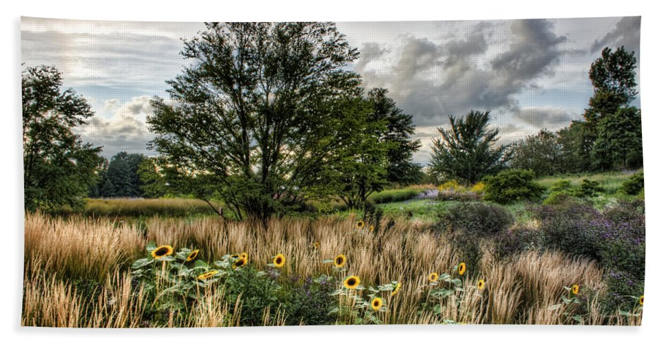 Chicago Beach Towel featuring the photograph Sunflowers In Bloom by Scott Wood
