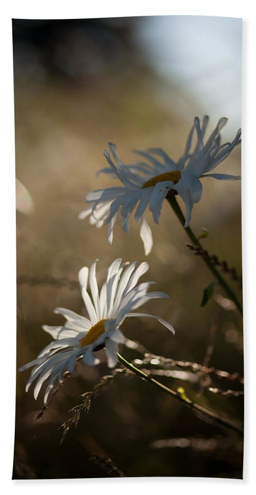 Flower Beach Towel featuring the photograph Sunlit Daisies by Mike Reid