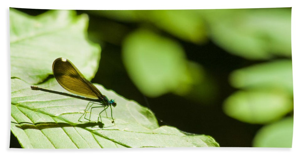 Dragonfly Beach Towel featuring the photograph Sunlit Dragonfly by Crystal Heitzman Renskers