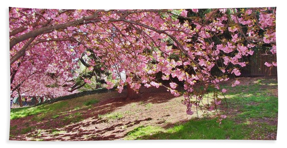 Cherry Blossoms Beach Towel featuring the photograph Sunny Patch Under The Cherry Trees by Margaret Bobb