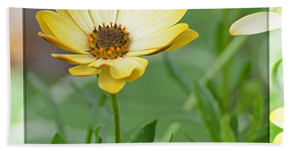 Flowers Beach Towel featuring the photograph Sunshiny Day by Debbie Portwood