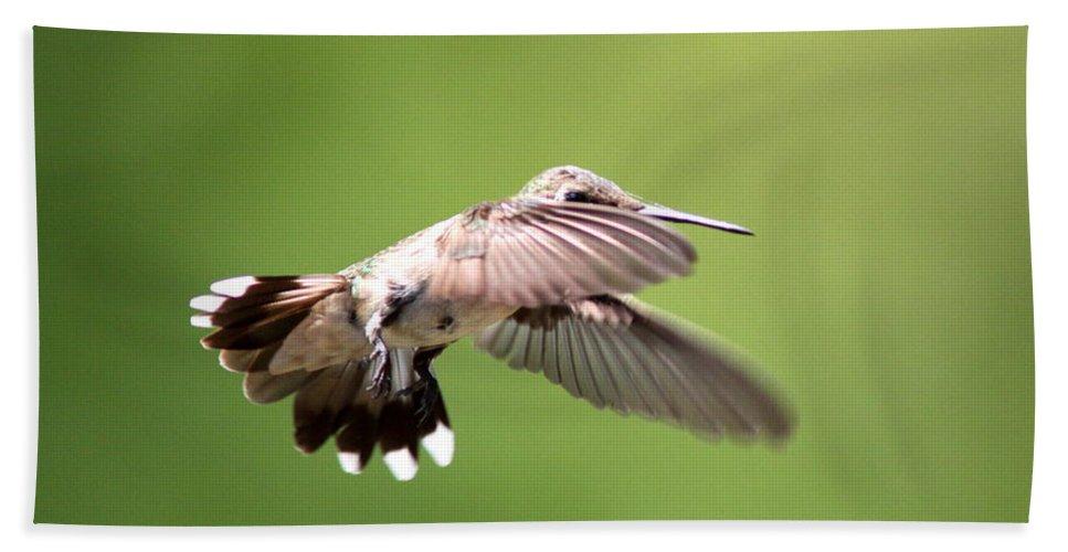 Hummingbird Beach Towel featuring the photograph Sure Shy by Travis Truelove