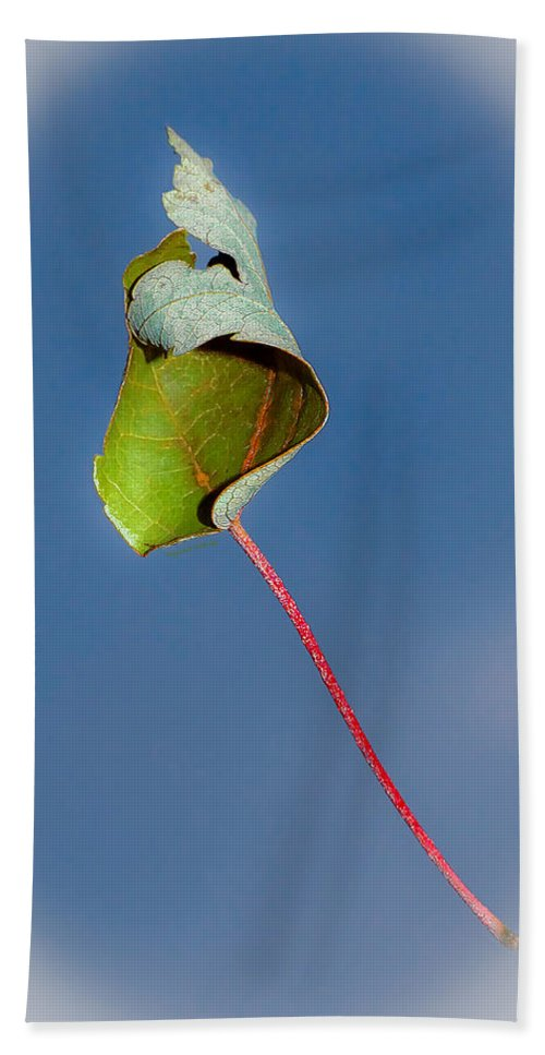 Leaf Beach Towel featuring the photograph Suspended In Air by DigiArt Diaries by Vicky B Fuller