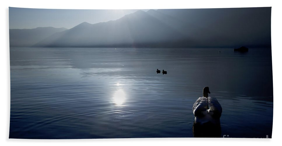 Swan Beach Towel featuring the photograph Swan And Ducks by Mats Silvan