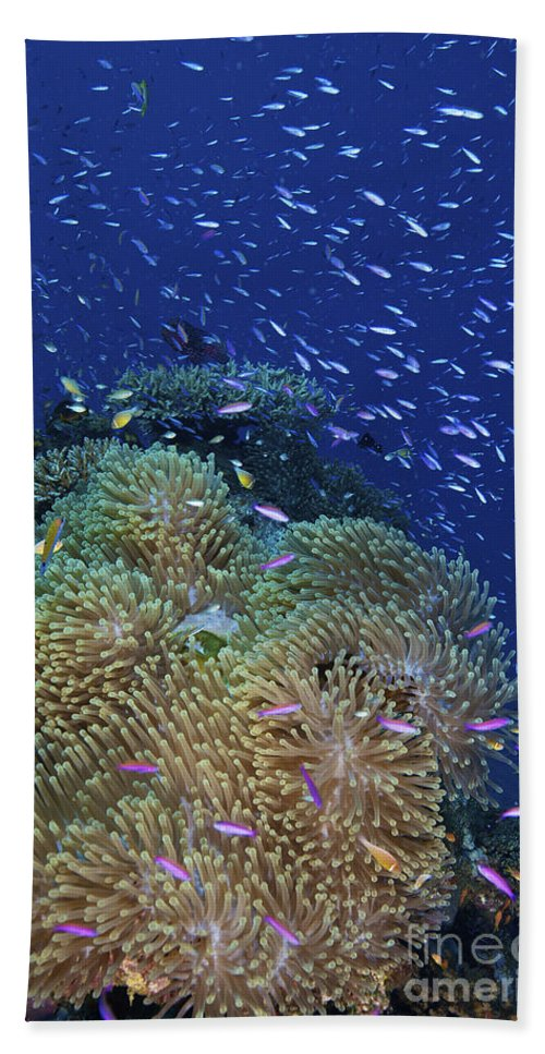 Sea Anemone Beach Towel featuring the photograph Swarms Of Small Baitfish Swim by Terry Moore