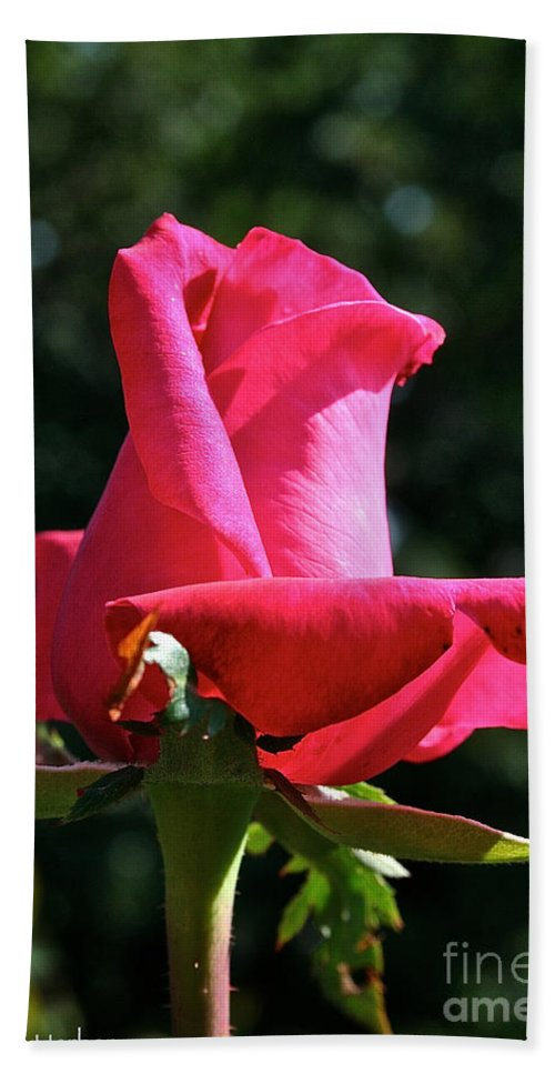 Outdoors Beach Towel featuring the photograph Swarthmore by Susan Herber