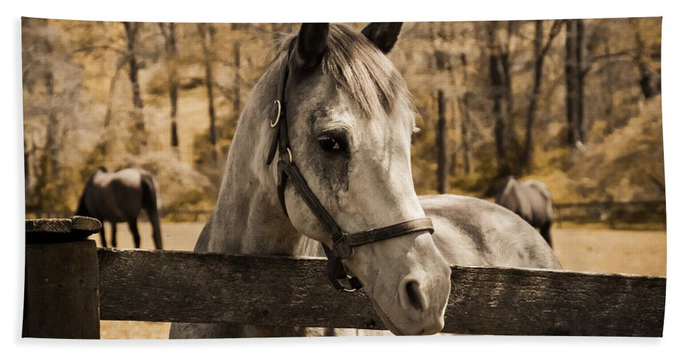 Horse Beach Towel featuring the photograph Take Me Home by Trish Tritz