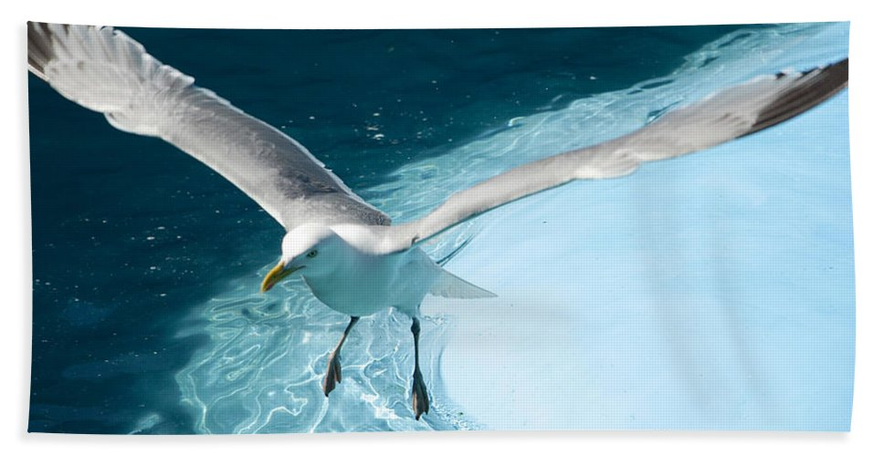 Seagull Beach Towel featuring the photograph Take Off by Jeff Galbraith