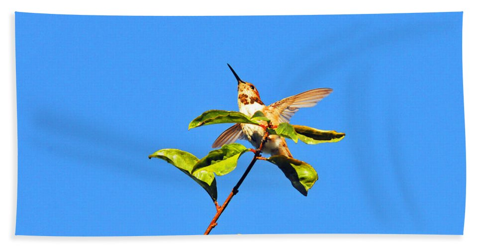 Hummers Beach Towel featuring the photograph Take Off by Lynn Bauer