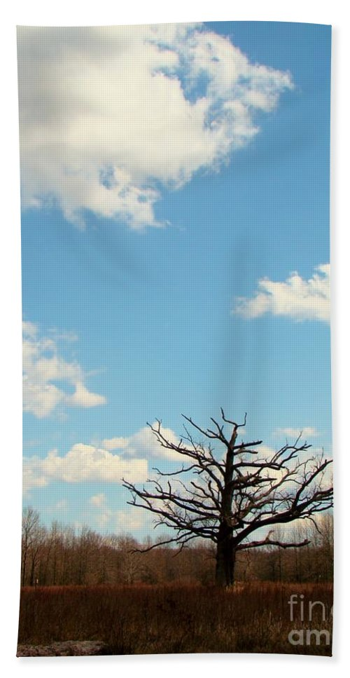 Tree Beach Towel featuring the photograph Tangled by Art Dingo