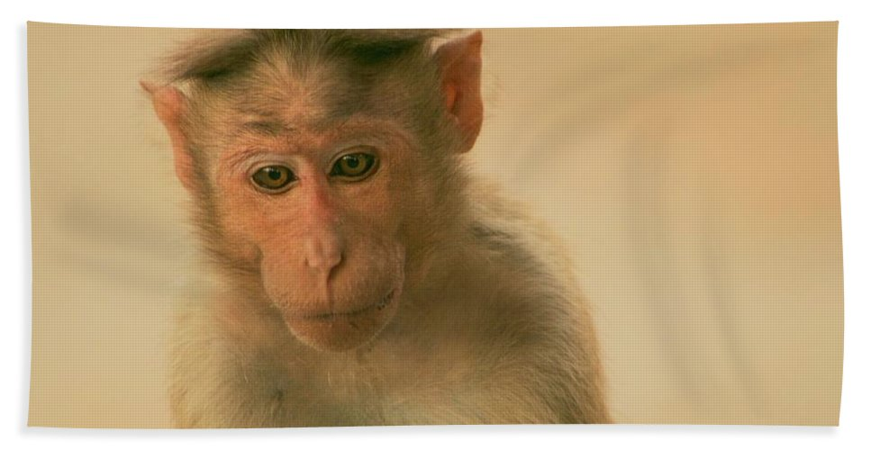 Monkeys Beach Towel featuring the photograph Temple Monkey by Valerie Rosen
