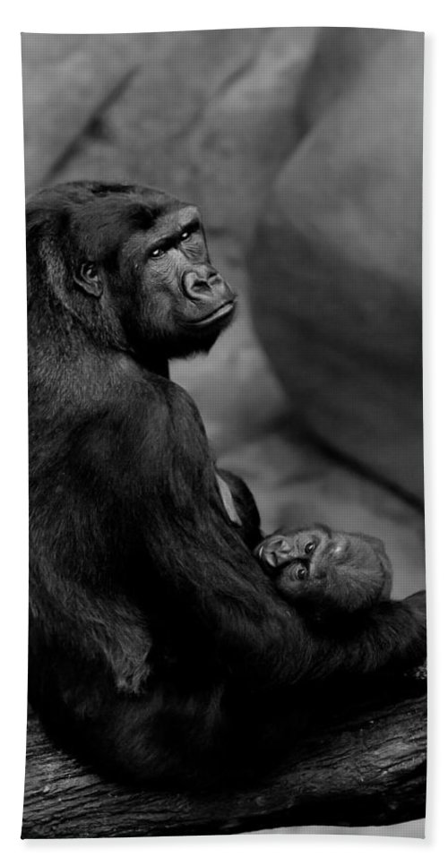 Gorilla Beach Towel featuring the photograph Tender Moment by Sebastian Musial