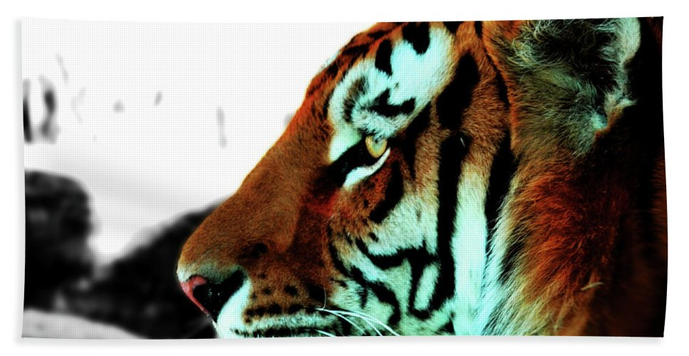 Tiger Beach Towel featuring the photograph The Alpha by La Dolce Vita