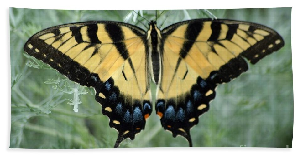 Butterfly Beach Towel featuring the photograph The Beauty Of A Butterfly by Living Color Photography Lorraine Lynch