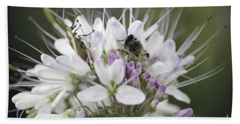 Bees Beach Towel featuring the photograph The Beetle And The Bee by Donna Greene
