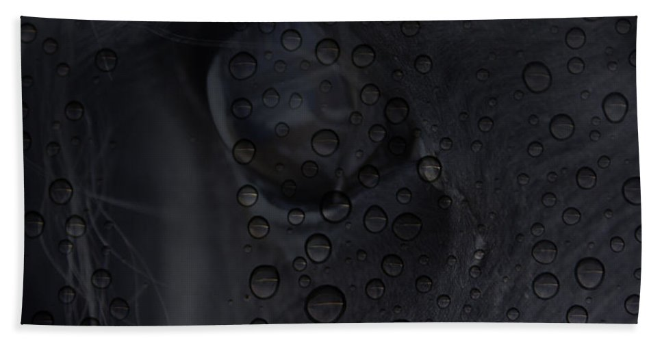 : Jerry Cordeiro Photographs Photographs Photographs Photographs Photographs Photographs Photographs Beach Towel featuring the photograph The Crying Horse by The Artist Project