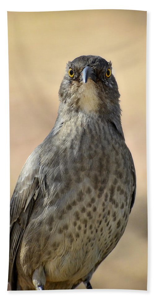 Curve-billed Thrasher Beach Towel featuring the photograph The Eyes Have It by Saija Lehtonen