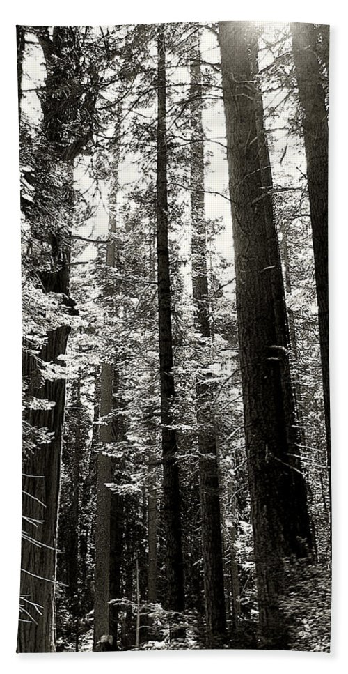 Trees Beach Towel featuring the photograph The Forest Through The Trees by Pam Holdsworth