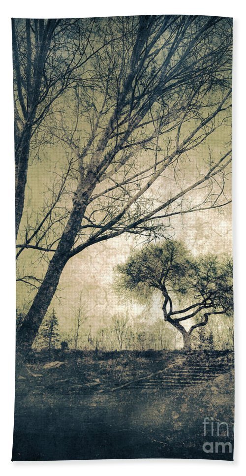 Tree Beach Towel featuring the photograph The Forgetting Tree by Tara Turner
